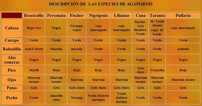 especies de agaporni diferencias