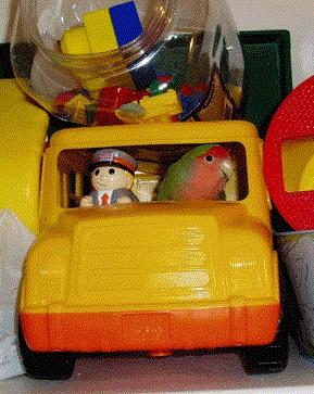agaporni divertido dentro coche de juguete