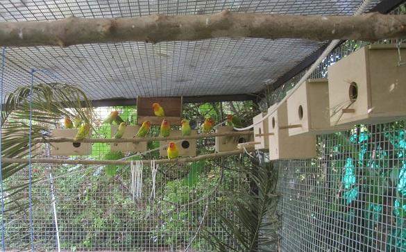 aviarios exteriores grandes para inseparables