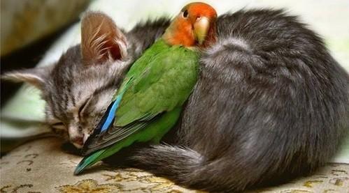 comportamiento inseparables con otras mascotas hogar