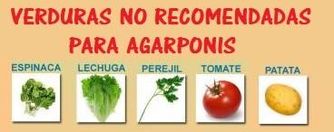verduras toxicas prohibidas para inseparables