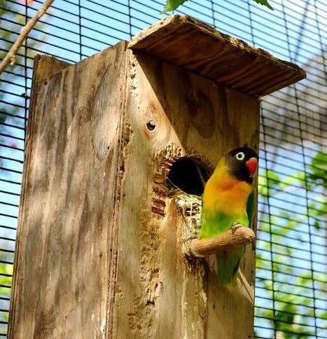 nidos para agapornis inseparables